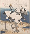 「三ひらの内」汀五羽の鶴-Five Cranes by the Water's Edge, from the series Three Sheets (Mihira no uchi) MET DP139049.jpg