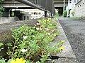 京成国府台駅前 - panoramio.jpg