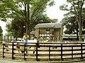 渋谷区立代々木ポニー公園 - panoramio.jpg