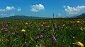 热尔大坝草原Rerdaba grassland - panoramio (9).jpg