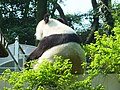 福州熊猫世界-不知名的熊猫.jpg