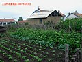 黑土地 农家菜园 vegetables and black soil - panoramio.jpg