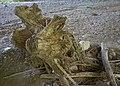 007 - Resti di tronchi trascinati dalle piene.jpg