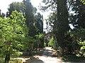 04 Casa Pladellorens (Vilafranca del Penedès), jardí, amb la casa al fons.jpg