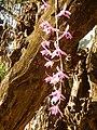 07089jfMaharlika Highway Orchids Handicrafts San Rafael Bulacanfvf 46.jpg