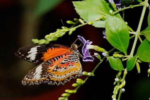 2011-08-08 16-01-26-papillon-hunawihr