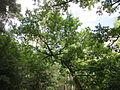 20130731Speyrer Wald19.jpg