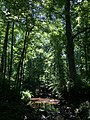 2015-06-12 14 46 09 View west along the Cain Branch of the Cub Run in Chantilly, Virginia.jpg