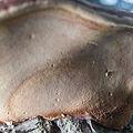 20150712 Fomitopsis pinicola 8463.jpg