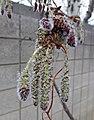 2016.03.17 07.24.37 DSC02983 - Flickr - andrey zharkikh.jpg