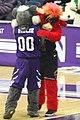 20180206 UM-NW Willie the Wildcat hugging Benny the Bull 7DM27119.jpg