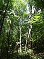 20180522190DR Dohna Naturschutzgebiet Spargrund.jpg