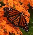 2019-04-15 13-03-28 jardin-papillons-hunawihr.jpg