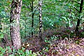 2019-10-05 Hike Forst Leucht. Reader-15.jpg