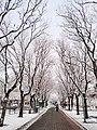 20191130 北京大雪2.jpg