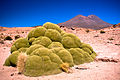 3,000 Year Old Yareta Plant (2087602585).jpg