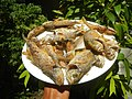 3412Fried fish in the Philippines 26.jpg