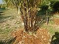 43Lubao Bamboo Hub & Eco-Park Santa Catalina Pampanga 29.jpg