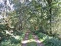 49849 Wilsum, Germany - panoramio.jpg