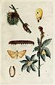 63-Indian-Insect-Life - Harold Maxwell-Lefroy - Dichocrocis-punctiferalis.jpg