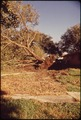 A 100-YEAR OLD OAK TREE IS UPROOTED TO MAKE WAY FOR THE DRIVEWAY OF A NEW HOUSE BEING BUILT ON THIS LOT - NARA - 545966.tif