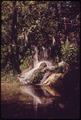 A NATURAL SPRING PHOTOGRAPHED AT ITS SOURCE - NARA - 546180.tif