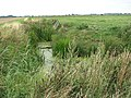 A drain in the Norton Marshes - geograph.org.uk - 1442522.jpg