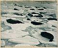 A dreamy Venice in seal-land, from (Exhibition of pictures taken during the Australasian Antarctic Expedition and other photographic studies by Frank Hurley), 1911-1914 (5875902602).jpg