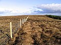 A moorland fence - geograph.org.uk - 616108.jpg
