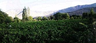 Hazaveh - Vineyards in Hazaveh
