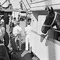 Aankomst van de paarden voor de koninklijke calèche in de haven van Willemstad, Bestanddeelnr 252-2725.jpg