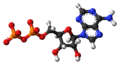 Adenosine-diphosphate-anion-3D-balls.png