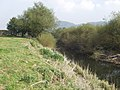 Afon Hafren (River Severn) at Tirymynach - geograph.org.uk - 579602.jpg