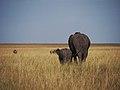 African elephant (20873152628).jpg
