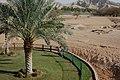 Al Ain Zoo - panoramio (3).jpg