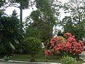 Algún Lugar en Yaracuy 2.jpg