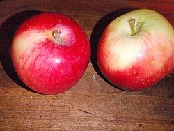 alice äpple