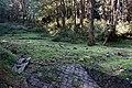 Alishan Forest Recreation Area 阿里山森林遊樂區 - panoramio (8).jpg