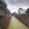 Allée de charmes du cimetière ancien de Courbevoie.jpg