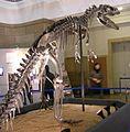Allosaurus at Tokyo NSM.jpg