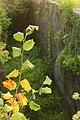 Allt-yr-yn Lock Autumn.jpg