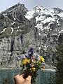 Alps flowers.jpg