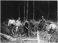 American Engineers In France. In the heart of a great forest the men are constantly felling trees t . . . - NARA - 533605.tif