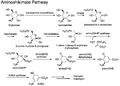 Aminoshikimate pathway.png