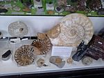 Ammonites for sale at the Albert Dock, Liverpool - 2013-06-07 (4).jpg