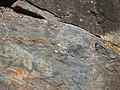 Amphibolite - Acebuches, Huelva, Spain 02.jpg