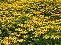 Amstelpark flowers.jpg