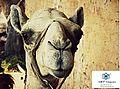 An Egyptian camel.jpg