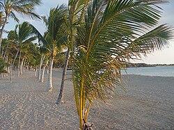 Hilton Royal Palms Resort Myrtle Beach Sc