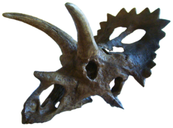Anchiceratops.png